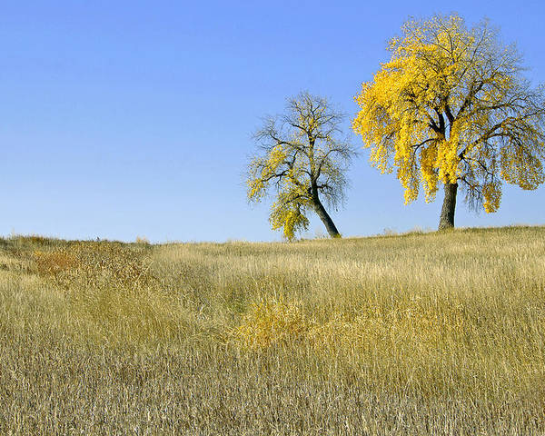 Fall. Blue. Sky. Weeds. Yellow. Grass. Fields. Water. Rain. Clouds.fall Colors Photography. Mixed Media. Mixed Media Photography. Mixed Media Fall Colors. Fine Art Fall Colors. Colorado Fall Colors. Fall Greeting Cards. Yellow Fall Color Photography. Fall Colors In Fort Collins Co. Gallery Fine Art Photography. Fall Landscape Photography. Poster featuring the photograph Fall Days In Fort Collins Co by James Steele