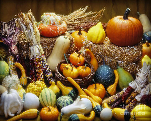 Harvest Poster featuring the photograph Fall Harvest by Martin Konopacki