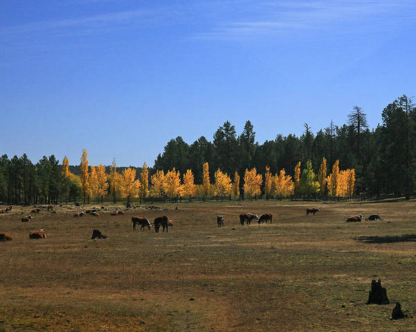 Landscape Poster featuring the photograph Fall In Line by Randy Oberg