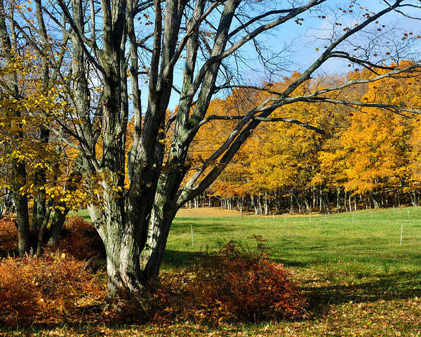 Trees Poster featuring the photograph Fall Pasture by Tim Nyberg