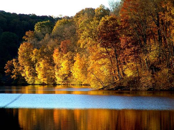 Trees Poster featuring the photograph Fall Reflections Of Indiana by Carol Milisen