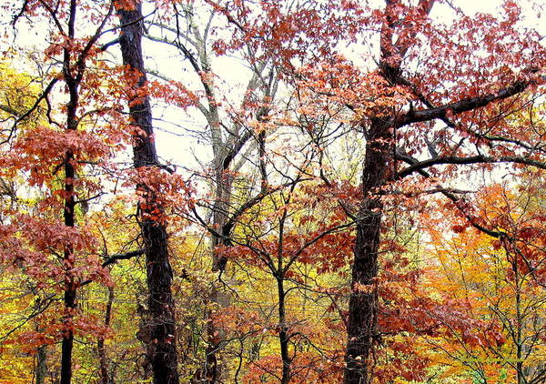 Foliage Poster featuring the photograph Fall Splatter by Deborah Crew-Johnson