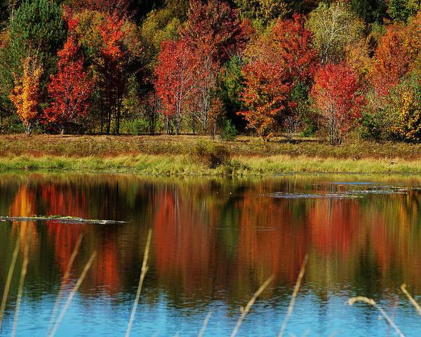Autumn Poster featuring the photograph Fall Splendor by Linda Murphy
