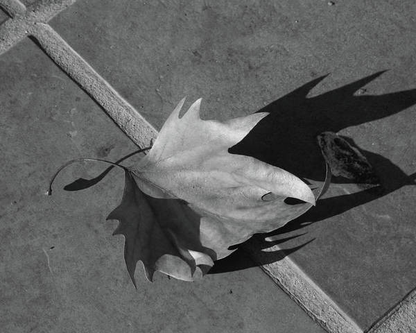 Fallen Leaf Poster featuring the photograph Fallen Leaf by Yavor Kanchev