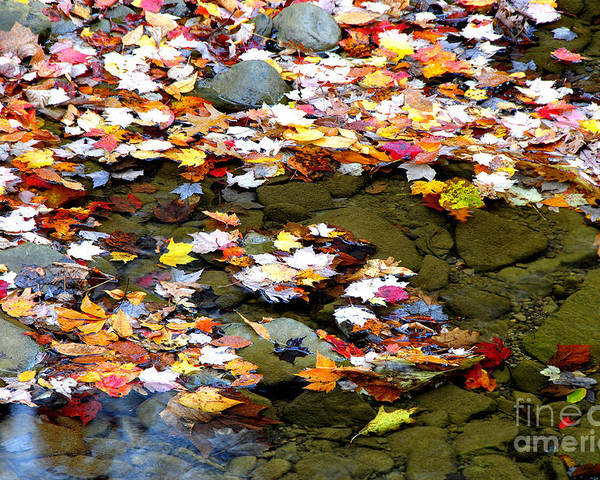 Autumn Poster featuring the photograph Fallen Leaves Birch River by Thomas R Fletcher