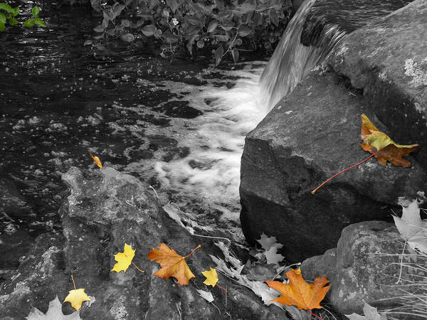 Fall Poster featuring the photograph Fallen Leaves by David Quist