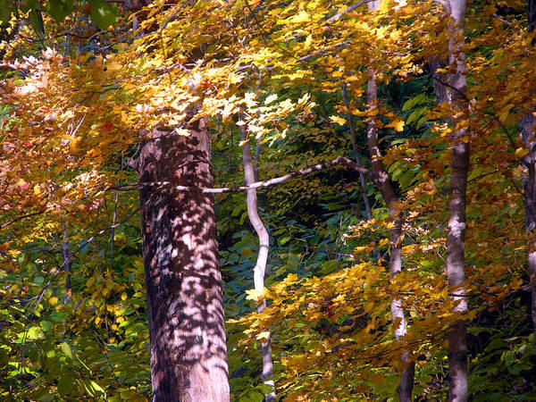 Fall Trees Poster featuring the photograph Falls Splendor by John Lautermilch