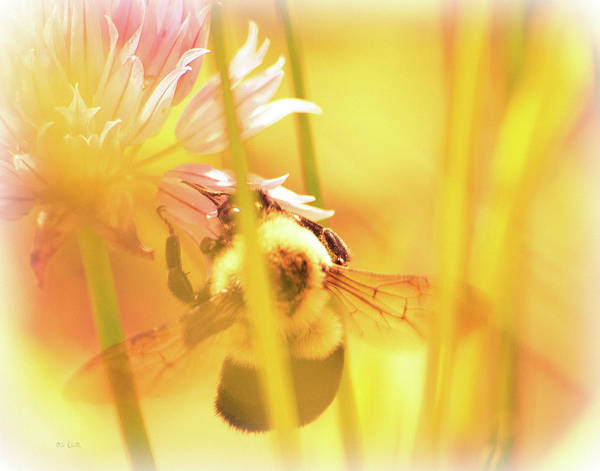 Bees Poster featuring the photograph Fame Is A Bee by Bob Orsillo