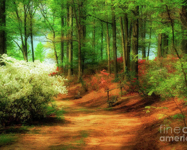 Landscape Poster featuring the photograph Favorite Path by Lois Bryan