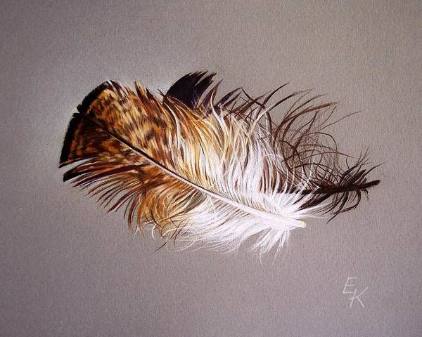 Still Life Poster featuring the drawing Feather And Shadow 2 by Elena Kolotusha