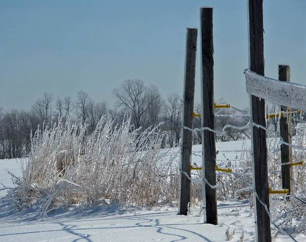 Weather Poster featuring the photograph Fence Posts In Ice by Martie DAndrea