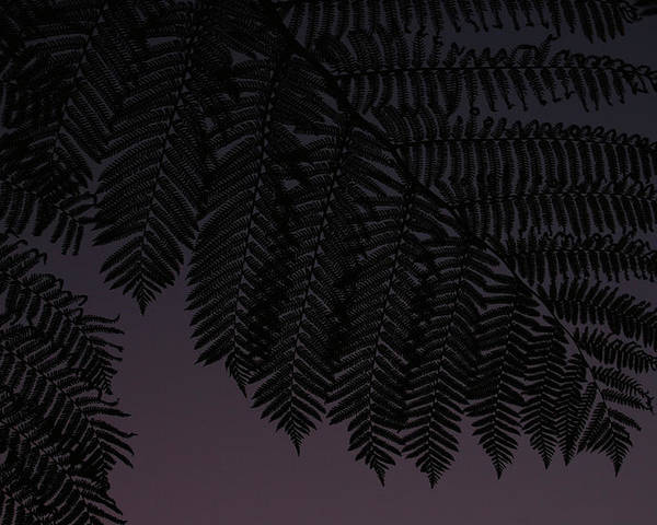 Silhouette Poster featuring the photograph Fern At Dusk by Jean Booth