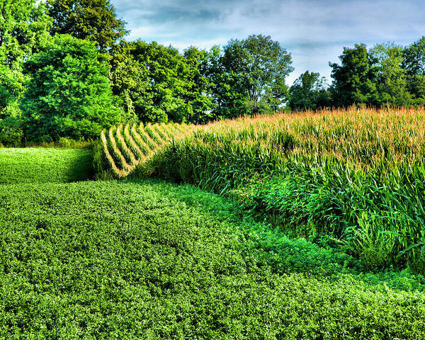 Cornfield Poster featuring the photograph Field Of Dreams Iv by Steven Ainsworth