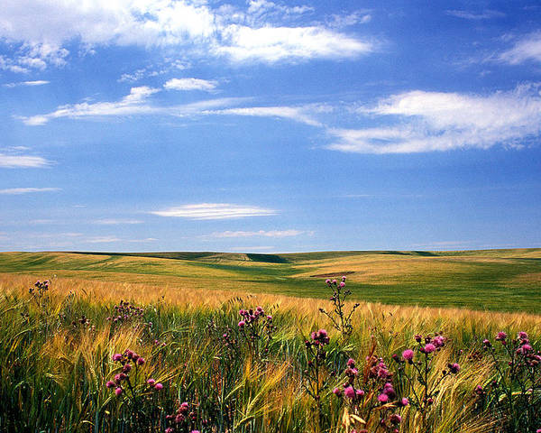 Landscapes Poster featuring the photograph Field Of Dreams by Kathy Yates