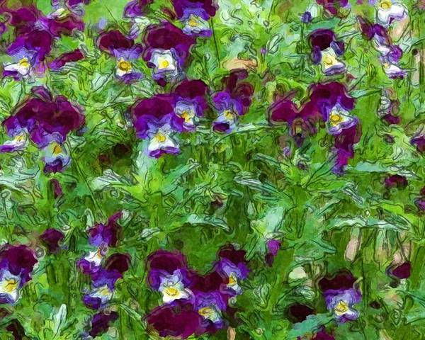 Digital Photograph Poster featuring the photograph Field Of Pansy's by David Lane