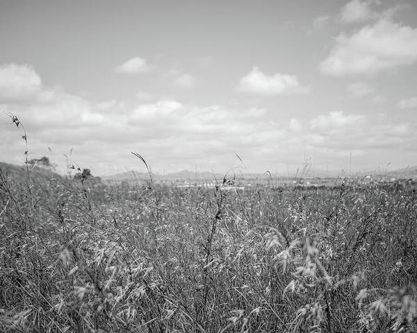 Black And White Poster featuring the photograph Field Of Wheat by Nathaniel H Broughton