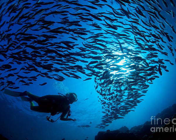 Adventure Poster featuring the photograph Fiji, Galapagos Islands by Dave Fleetham - Printscapes