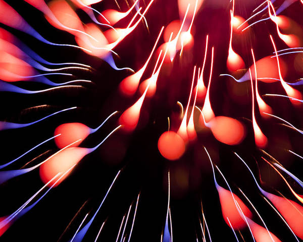 Fireworks Poster featuring the photograph Fire Tadpole K860 by Yoshiki Nakamura