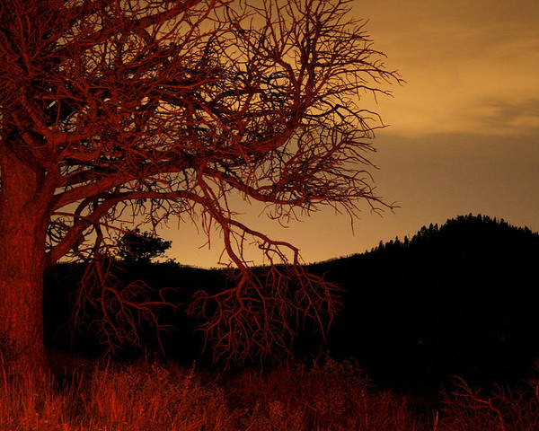 Landscape Poster featuring the photograph Fire Tree by Jeffery Ball