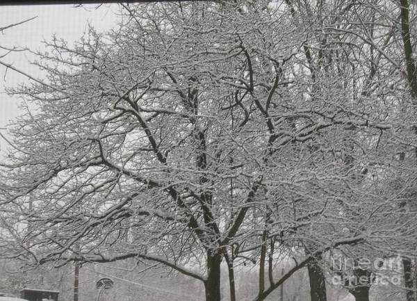 Poster featuring the photograph First Snowfall Of The Season by Barb Montanye Meseroll