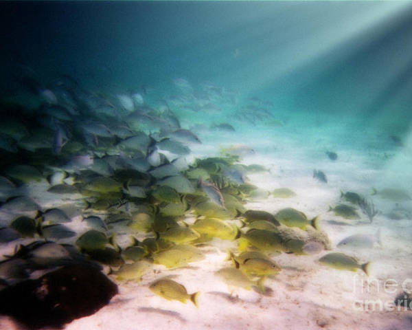 Fish School Poster featuring the digital art Fish Swim In The Light by Sven Brogren