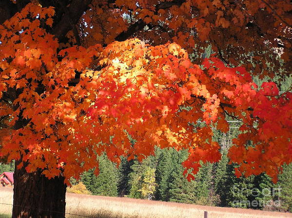 Autumn Photographs Poster featuring the photograph Flickering Sunlight by Louise Magno