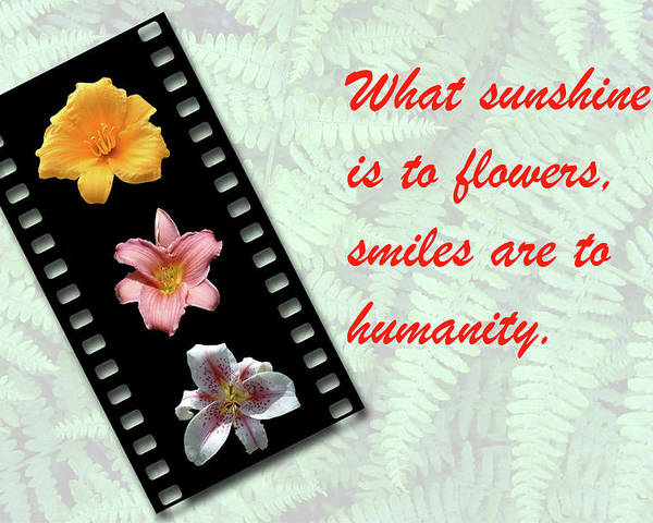 Flowers Poster featuring the photograph Floral Filmstrip by Bill Barber