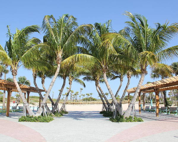 Florida Poster featuring the photograph Florida Palms At Beach by Rebecca Pavelka