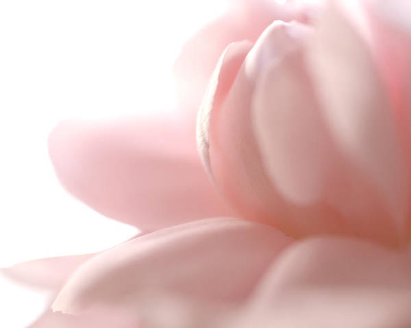 Pink Poster featuring the photograph Flower Abstract by Jessica Wakefield
