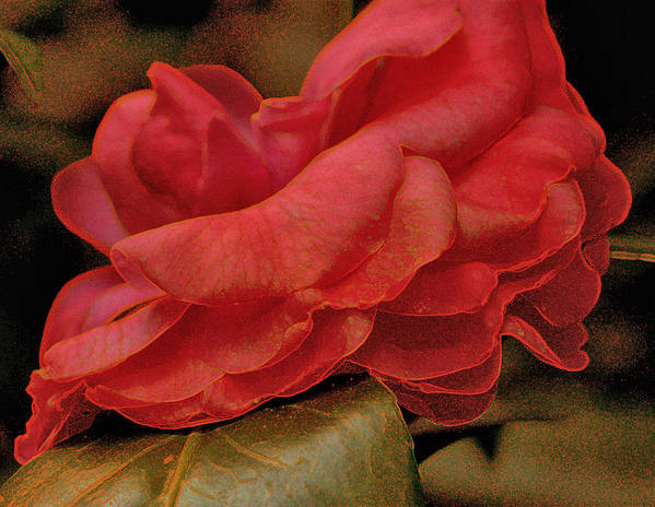 Digital Art Poster featuring the photograph Flower Dusting by Larry Jones