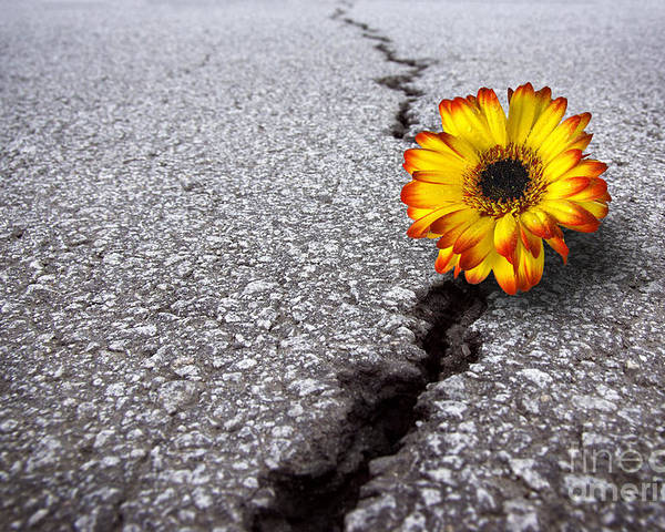 Abstract Poster featuring the photograph Flower In Asphalt by Carlos Caetano