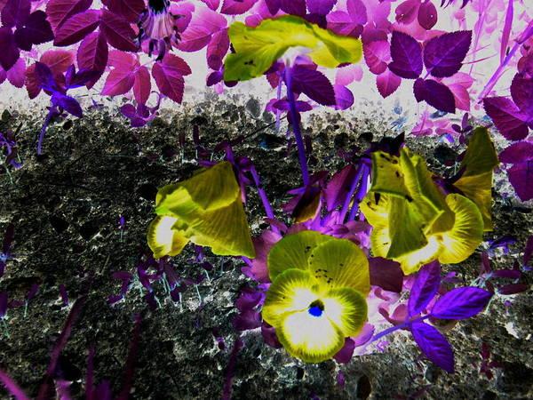 Flower Like Purple And Yellow Poster featuring the photograph Flower Like Purple And Yellow by Petra Olsakova