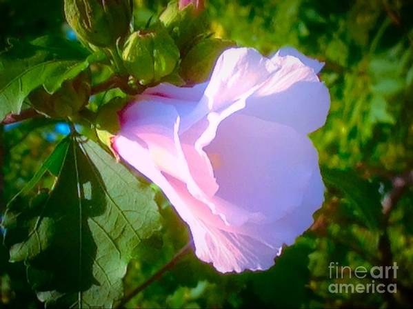 Soft Poster featuring the photograph Flower With Painted Look by Debra Lynch