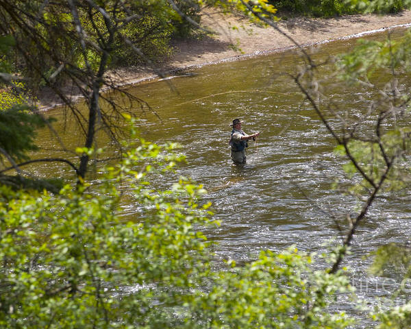 Fishing Poster featuring the photograph Fly Fishing by Louise Magno