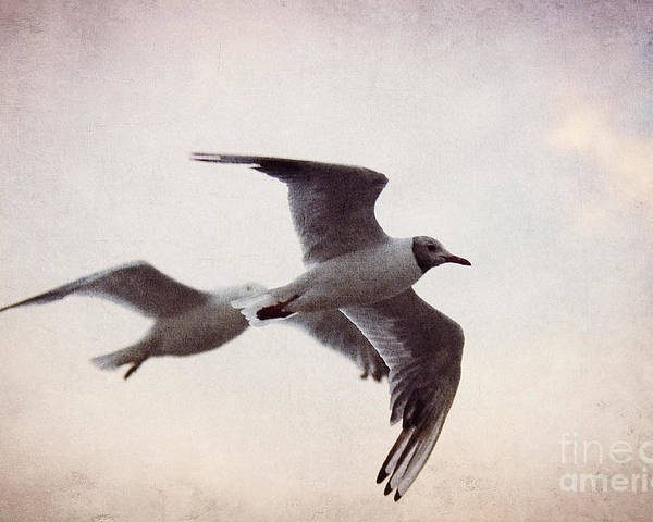 Gull Poster featuring the photograph Flying by Angela Doelling AD DESIGN Photo and PhotoArt