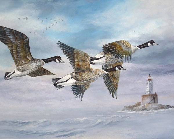 Aleutian Geese Poster featuring the painting Flying Home by Lynne Parker