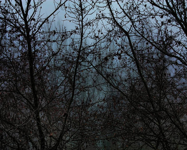 Trees Poster featuring the photograph Fog In The Trees by Angel Jesus De la Fuente