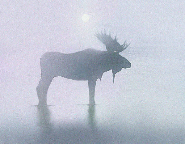 Landscape Poster featuring the painting Fog Moose by Robert Foster