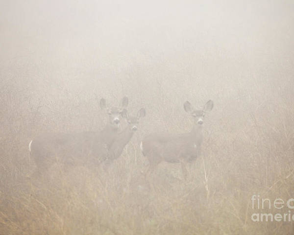 Deer Poster featuring the photograph Foggy Eyes by Greg Clure