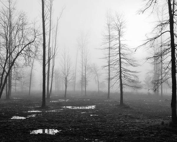 Landscape Poster featuring the photograph Foggy Morning by Conn Hutzell
