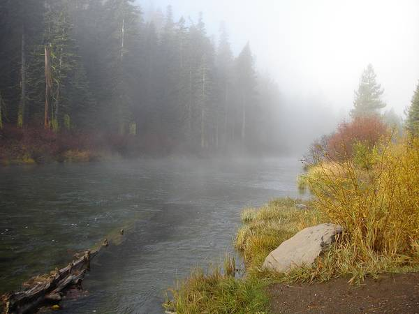 River Poster featuring the photograph Foggy Truckee River by Charlotte Patterson