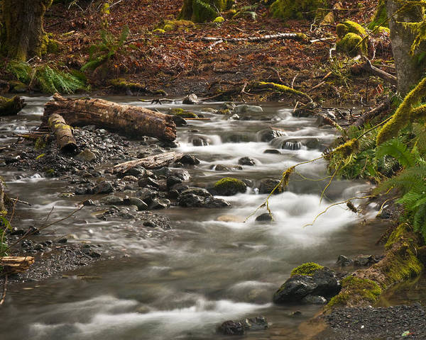 River Poster featuring the photograph Forest Creek by Chad Davis