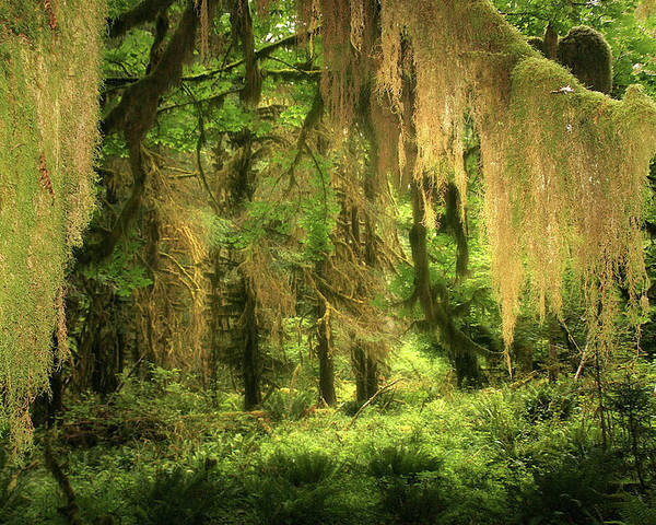 Quinault Rain Forest Poster featuring the photograph Forest Fantasy - Quinault - Gateway To Paradise On The Olympic Peninsula Wa by Christine Till