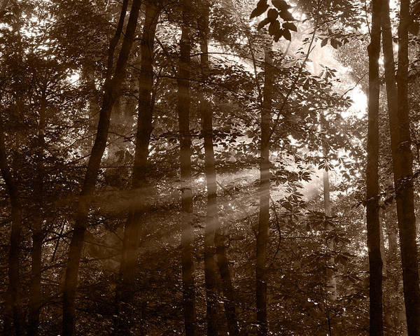 Black Poster featuring the photograph Forest Mist B And W by Steve Gadomski