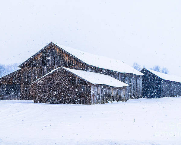Poster featuring the photograph Four Barns In A Snowstorm by Libby Lord
