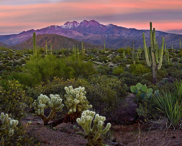 Arizona Poster featuring the photograph Four Peaks Sunset by Dave Dilli