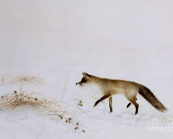 White; Alone; Renard; Neige; Snow; Fox; Animal; Winter; Landscape Poster featuring the painting Fox In Snow by Jane Neville
