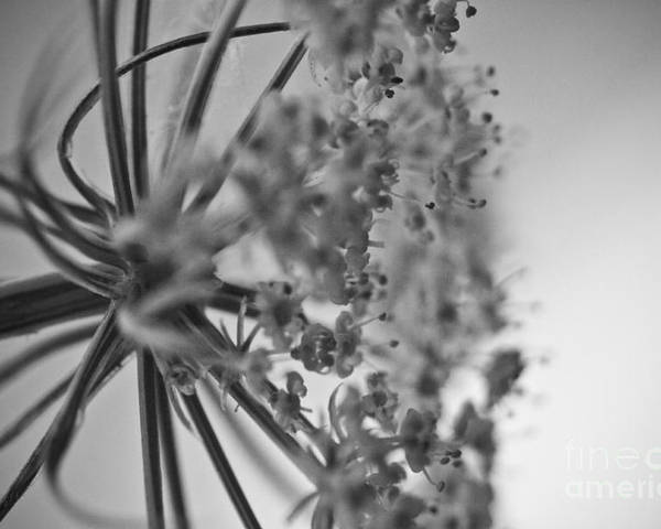 ryankellyphotography@gmail.com Poster featuring the photograph Fractal Flower Photoset 03 by Ryan Kelly