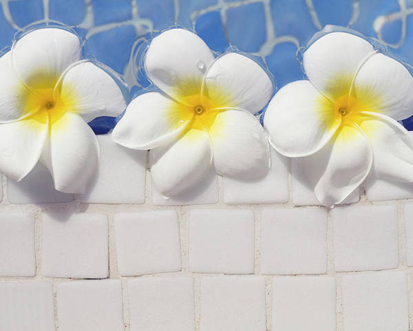 Horizontal Poster featuring the photograph Frangipani Flowers by Laura Leyshon