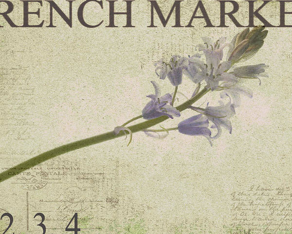 Purple Poster featuring the photograph French Market Series F by Rebecca Cozart